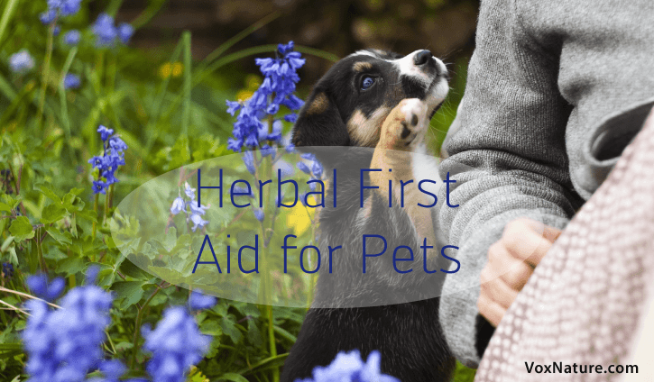 Our pets are much like our children in two big ways Herbal First Aid Remedies for Pets Herbal First Aid Remedies for Pets
