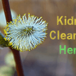 9 Powerful Herbs for Kidney Cleansing
