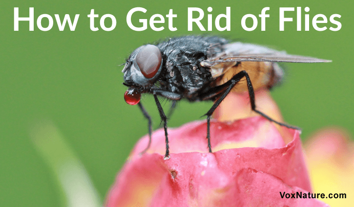 Everyone hates them and they seem to move with lightning speed when flying into the house 9 Natural Ways to Get Rid of Flies