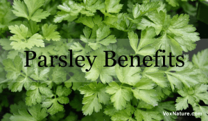 7 Powerful Health Benefits of Parsley