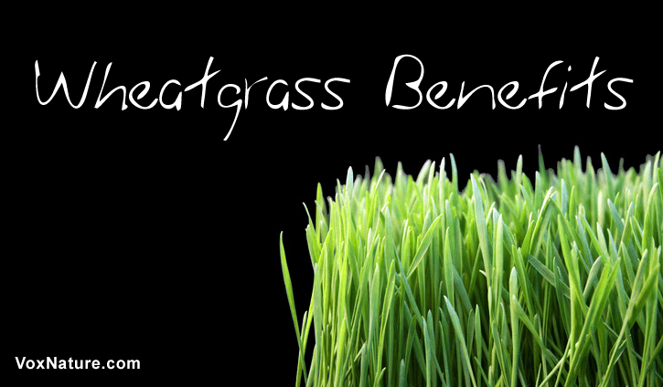 Surprising Health Benefits of Wheatgrass  7 Surprising Health Benefits of Wheatgrass