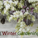 7 Gardening Tips for Fall & Cold Weather