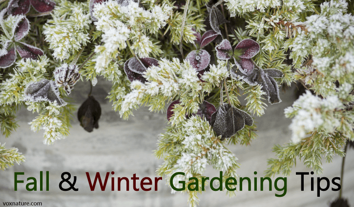 s not much you can do for your garden in the fall and winter months  7 Gardening Tips for Fall  Cold Weather
