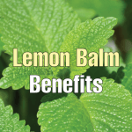 Health Benefits & Uses of Lemon Balm (Melissa officinalis)