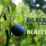 Health Benefits of Bilberry (Vaccinium myrtillus)