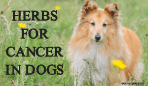 Supplements and Herbs to Suppress Cancer Cells (in dogs)