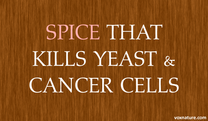 Research Confirms This Ancient Healing Spice Can Kill Both Yeast Causes Cancer: Research Confirms This Ancient Healing Spice Can Kill Both