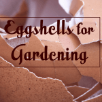 How Eggshells Can Add Value to Your Organic Garden