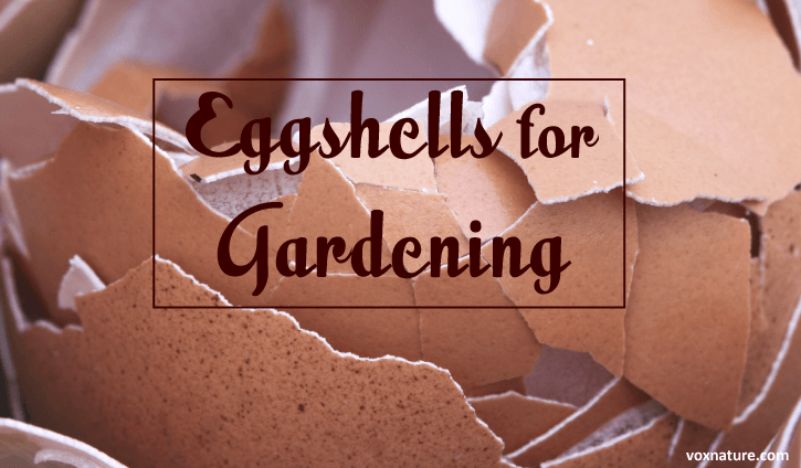 How Eggshells Can Add Value to Your Organic Garden How Eggshells Can Add Value to Your Organic Garden