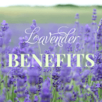 Health Benefits and Uses of Lavender (Lavandula angustifolia)