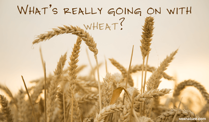 and humans have been consuming bread for hundreds of years It's Not the Gluten: Something Else is Wrong With Wheat