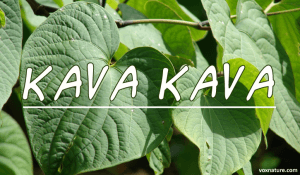 Medicinal Benefits of Kava Kava (Piper methysticum)