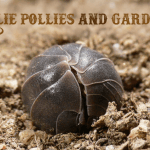 Rollie Pollies Can Add Value to Your Organic Garden