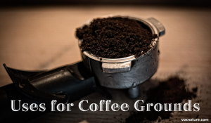 Coffee Grounds for Home and Garden Use
