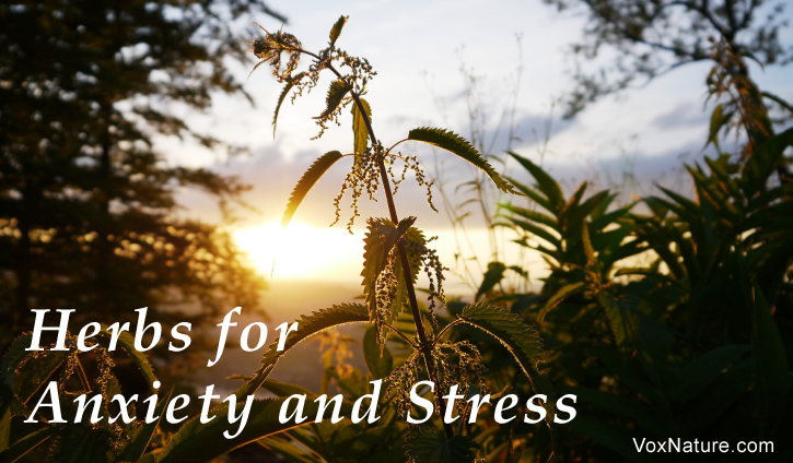Stress and anxiety seem to be natural by Herbs for Anxiety and Stress