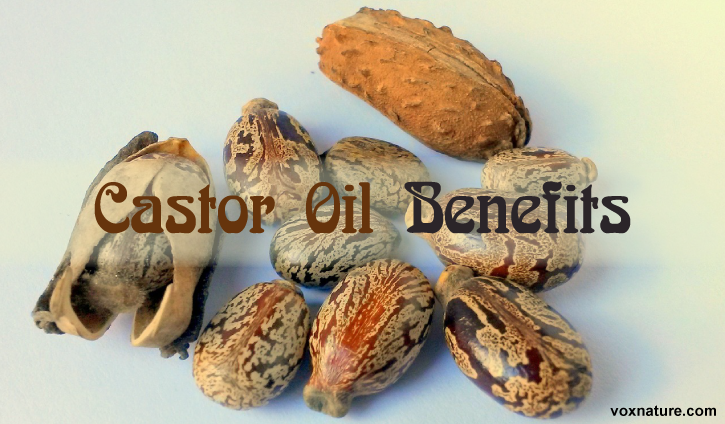 Reasons Castor Oil Deserves a Place in Every Home 9 Reasons Castor Oil Deserves a Place in Every Home