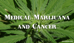 Scientific Evidence Suggests That Marijuana Can Cure These Types of Cancers