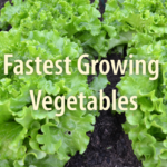 11 Vegetables That Can Be Harvested In Very Little Time