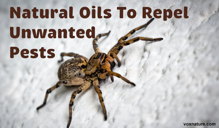Natural Oils To Repel Unwanted Pests From Your Home  5 Natural Oils To Repel Unwanted Pests From Your Home  Garden