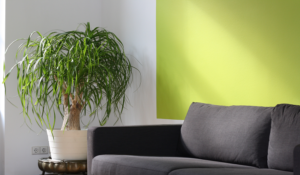 How to Keep Your Home Allergen Free
