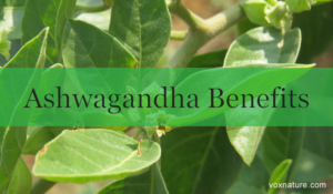 Health Benefits of Ashwagandha (Withania somnifera)
