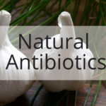 15 Natural Antibiotics Medical Doctors Will Never Prescribe