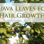 How to Use Guava Leaves for Hair Growth