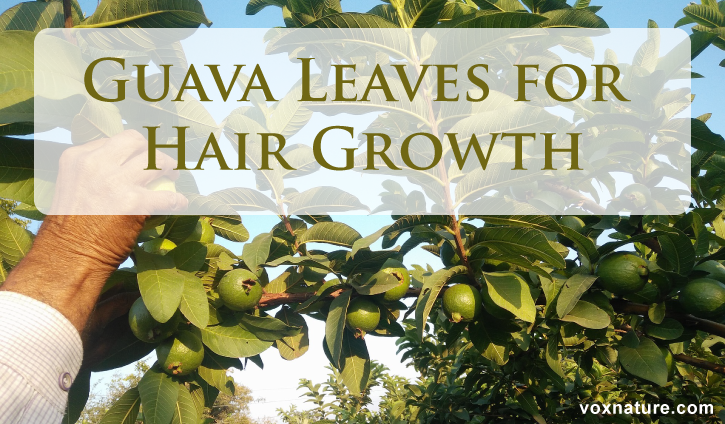 you told your hair stylist to trim it an inch and she lobbed off three inches  How to Use How to Use Guava Leaves for Hair Growth