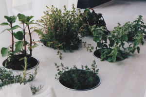 How To Grow Fascinating Healthy Indoor Plants