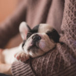 The Ins and Outs of Caring for Small Dog Breeds