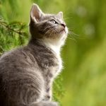 6 Human Foods that are Dangerous for Cats