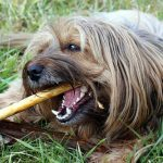 Tips for Keeping Your Dog's Teeth Clean
