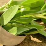 Health Benefits and Uses of Sage