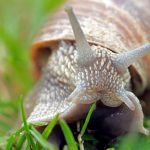 How to Get Rid of Slugs and Snails in Your Garden