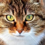 Is Milk Good for Cats?