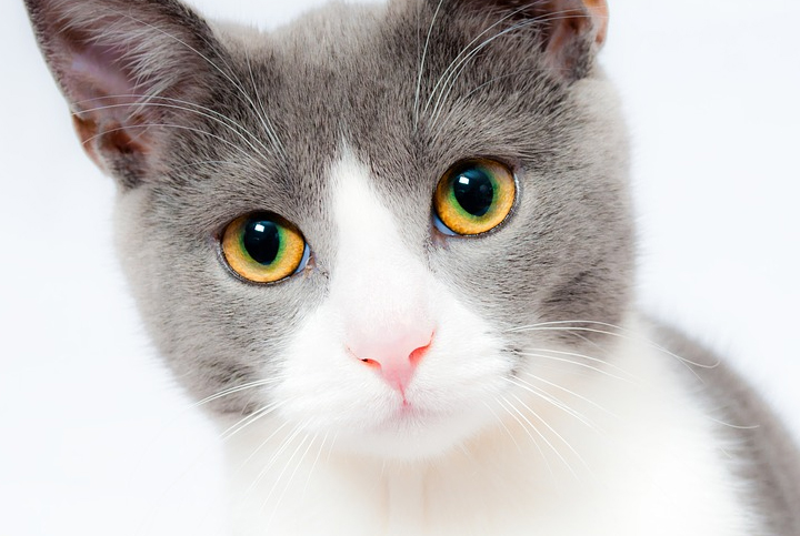 milk is the better option for most people Is Milk Good for Cats Is Milk Good for Cats?