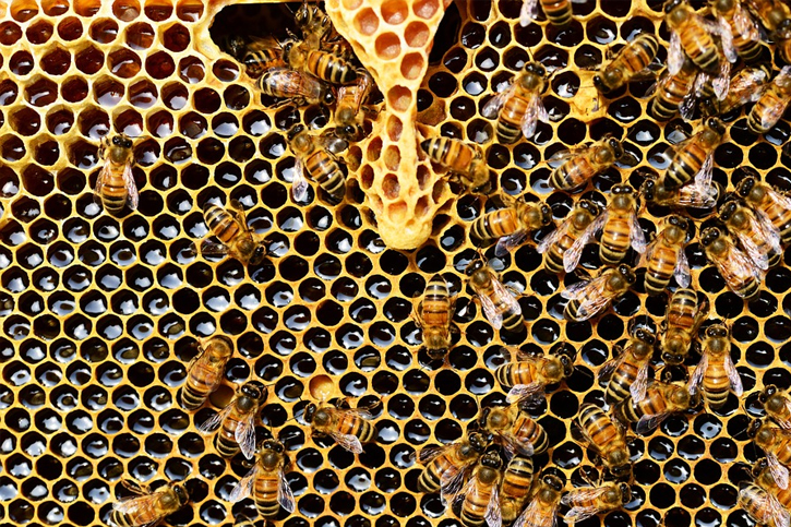 Honey is the natural thick syrup that bees create throughout their lives How to Tell Fake Honey From Real Honey