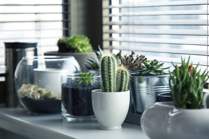 Your plants have been a part of you ever since you brought them into your home How to Water Plants while on Vacation