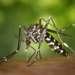 Natural Mosquito Repellents That Really Work