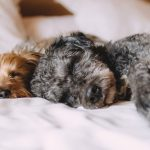 Is It Healthy to Sleep With Your Pet?