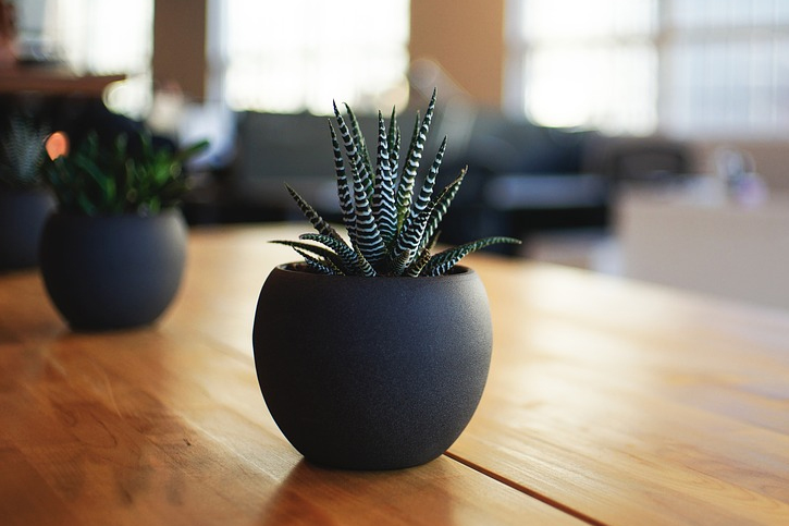 they provide a relaxed environment that Best Plants to Grow for Beginners