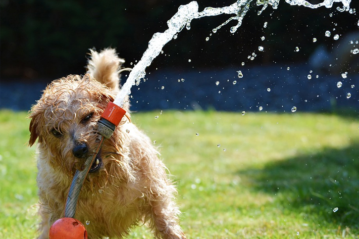 Dogs are vulnerable to heat and can suffer heatstroke in extreme temperatures How to Keep  How to Keep Your Dog Cool in the Summer?