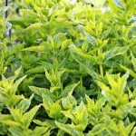 Healing Herbs You Can Grow at Your Own Garden