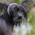 Common Causes of Hair Loss in Dogs