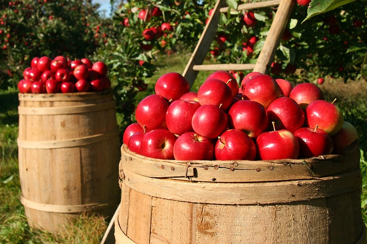 Almost all fruits and vegetables have a natural wax coating to keep moisture in because th All you Have to Know  About Wax Coatings on Fruit and Vegetables